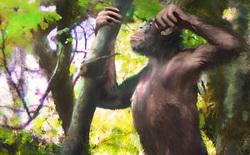 Phát hiện hài cốt sinh vật lạ có chân người và cánh tay vượn, được cho là tổ tiên loài người cách đây 12 triệu năm