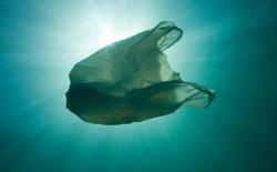 """Chiếc """"bẫy"""" bằng bong bóng khí siêu thông minh này hứa hẹn sẽ giải quyết vấn nạn rác thải nhựa ngoài đại dương"""