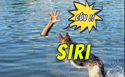Bất cẩn lao xe xuống sông, anh thanh niên may mắn thoát chết nhờ hét lên gọi trợ lí ảo Siri