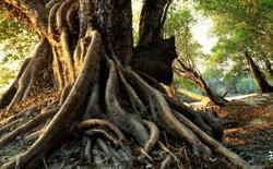 Điều gì xảy ra nếu mọi người được gửi trở lại Trái Đất 7 triệu năm trước?