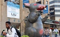 """Càng mở chiến dịch diệt chuột, chúng ta càng tạo ra những quần thể """"siêu chuột"""" biến đổi gen đáng sợ hơn"""