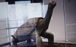Đây là danh sách toàn bộ 160 loài sinh vật đã tuyệt chủng trong thập niên 2010
