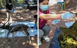 Vấn nạn rác thải nhựa ngày càng nhức nhối: Một con nai vừa chết chỉ vì ăn phải 7kg nhựa