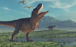Trước cả khi viên thiên thạch định mệnh đâm xuống Trái Đất, khủng long đã nhiễm độc thủy ngân nặng