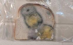 Thí nghiệm đơn giản với bánh mì tiết lộ tầm quan trọng của việc rửa tay trước khi ăn