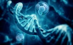 Tuổi thọ của các loài động vật được định sẵn trong DNA, và loài người chỉ thọ 38 năm mà thôi