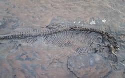 Đang dắt chó đi dạo, tình cờ phát hiện hóa thạch thằn lằn cá 65 triệu năm tuổi ngay trên bãi biển