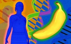 Nghiên cứu khoa học: Con người và chuối là họ hàng thân thiết, ADN giống nhau đến 50%?