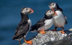 Giới khoa học bất ngờ trước video chim biết dùng công cụ: một con hải âu dùng que để gãi ngứa