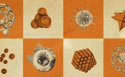 Vô hình và nguy hiểm hơn cả PM2.5: Những hạt bụi nano đang đi xuyên qua phổi vào máu bạn mỗi ngày