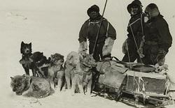 Chuyện kì lạ ở Nam Cực, ăn gan động vật có thể dẫn tới tử vong