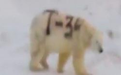 Hành vi sơn graffiti lên lông của một con gấu Bắc Cực chẳng khác nào chúng ta đang đối xử tàn nhẫn đối với thiên nhiên