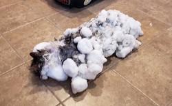 Một con mèo Mỹ hồi sinh sau khi chết cóng ngoài thời tiết dưới 0 độ