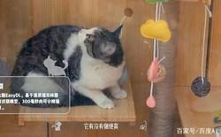 Baidu công bố dự án nơi trú ẩn cho những con mèo đi lạc với công nghệ AI và hỗ trợ nhận dạng mèo