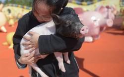 """Tết Kỷ Hợi không biết đi đâu chơi, mời ghé thăm công viên """"Hành tinh Lợn"""" ở Trung Quốc"""