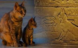 Loài mèo đã lợi dụng con người để xâm chiếm thế giới như thế nào?