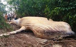 Xác cá voi dài 8m được phát hiện giữa rừng rậm Amazon khiến dân tình ngáo ngơ chẳng hiểu gì