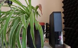 Tấm ảnh gây sốt trên Reddit: cây đặt cạnh thiết bị phát Wi-Fi không mọc nổi lá, sự thật thế nào?
