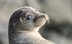 Công cuộc đi tìm chủ nhân của chiếc USB trong phân của chú hải cẩu đã đi đến hồi kết