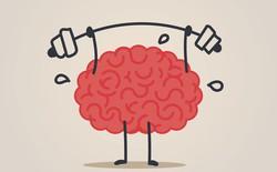 Não bạn nặng bao nhiêu kg? Đâu là những loài vật có não nhỏ nhất và lớn nhất?