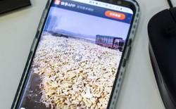 """Nông dân ở vùng nông thôn trở thành """"ngôi sao"""" trên ứng dụng live-stream, các thương nhân Trung Quốc chỉ cần xem video và dự đoán xu hướng giá nông sản"""