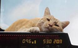 Bí mật hậu trường Captain Marvel: Làm việc với mèo khó khăn đến mức nào?