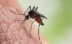 Tiêm thuốc này vào người, muỗi hút máu bạn sẽ bị tiêu diệt ngay lập tức