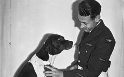 Những người lính bốn chân: cô chó Judy, tù binh chiến tranh đặc biệt của Thế Chiến thứ Hai