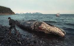 Sau 30 năm, những bức ảnh từ thảm họa tràn dầu Exxon Valdez vẫn còn gây ám ảnh