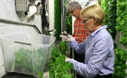 Freight Farms và công nghệ trồng rau tương lai: Không đất, không hóa chất, bất chấp thời tiết, hiệu quả gấp 80 lần và thu về 39.000 USD mỗi container