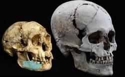 Các nhà khảo cổ vừa phát hiện một giống người lùn tại Philippines, cao chỉ 1,2 mét và biết trèo cây