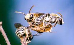 Đi khám vì đau mắt, một cô gái Đài Loan phát hiện 4 con ong đang sống trong mắt mình