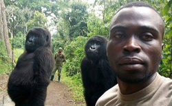 Khỉ đột tạo dáng selfie cùng các chú kiểm lâm ở Congo khiến internet thích thú