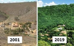 Trồng 4 triệu cây trong 20 năm, cặp vợ chồng Brazil hồi sinh khu rừng từng đối mặt sa mạc hóa, mở ra ngôi nhà cho hàng trăm loài động vật