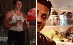 """2 con rùa trong """"Rocky"""" vẫn còn sống nhăn, chúng vừa tái hợp với Sylvester Stallone sau 43 năm"""