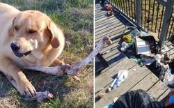Canada: Bắt quả tang gấu hối lộ xương cho chó để vào nhà dân bới thùng rác
