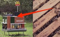 McDonald's khai trương McHive, nhà hàng tí hon dành riêng cho ong