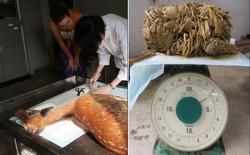 """Hươu Nara nổi tiếng Nhật Bản """"chết đói"""" vì ăn phải 3,2kg rác nhựa"""