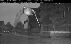 Bay vèo qua camera bắn tốc độ, chim bồ câu Đức bị phạt nguội 650.000 đồng