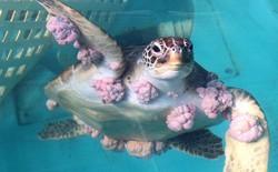Chúng ta chữa ung thư cho những con rùa, và đây là cách chúng trả ơn chúng ta