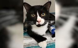 Hi hữu: Mèo sống sót kì diệu sau khi bị quay 35 phút trong máy giặt