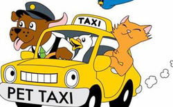 Brazil mở dịch vụ taxi dành riêng cho chó, mèo và nhiều con khác nữa