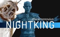 """Phát hiện loài ruồi thường xuất hiện vào mùa đông, đầu có sừng, thân như phủ băng tuyết, các nhà khoa học đặt luôn tên là """"Nightking"""""""