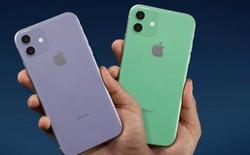 Apple có thể dùng màn hình OLED của BOE cho các mẫu iPhone trong tương lai