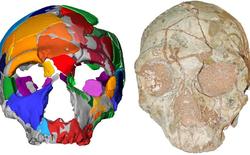 Phát hiện hóa thạch của nhóm người tiền sử đầu tiên rời khỏi Châu Phi