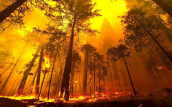 Cánh rừng lớn thứ hai thế giới đang nhả lượng CO2 tích trữ cả ngàn năm ra bầu khí quyển chỉ vì nạn phá rừng