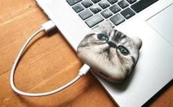 Thích độc đáo và khác biệt, sạc dự phòng hình mặt mèo này sẽ là phụ kiện, món quà vô cùng tuyệt vời dành cho bạn