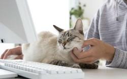 Chuyện lạ: Công ty công nghệ Nhật Bản này trích hẳn một khoản bồi dưỡng tiền nuôi mèo cho nhân viên