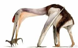 """Hatzegopteryx - Loài """"khủng long bạo chúa"""" trên không"""