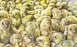 Mỗi năm, 7 tỷ con gà trống con sẽ bị giết ngay khi vừa mới nở: Công nghệ trứng nhân đạo này sẽ thay đổi điều đó
